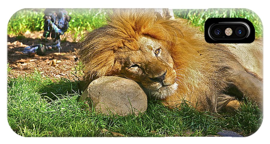 Animals IPhone X Case featuring the photograph Lion In Repose by SC Heffner