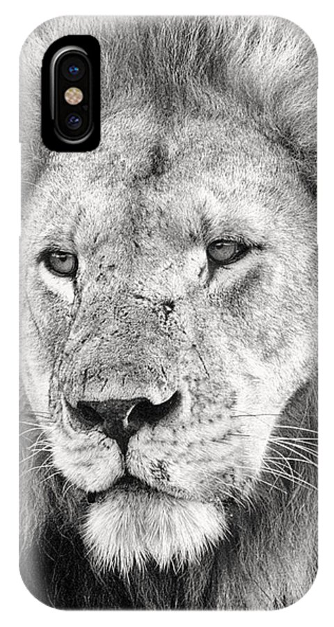 3scape IPhone X Case featuring the photograph Lion King by Adam Romanowicz