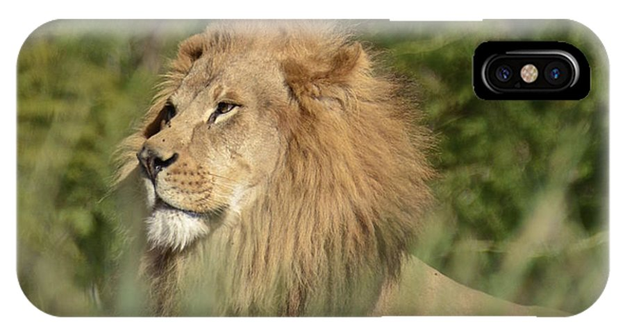 Lion IPhone X / XS Case featuring the photograph Lion King by Carol Bradley