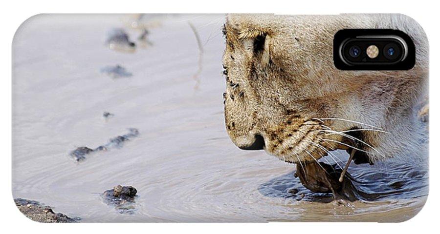 Lion IPhone X Case featuring the photograph Lion Lick by Marc Levine