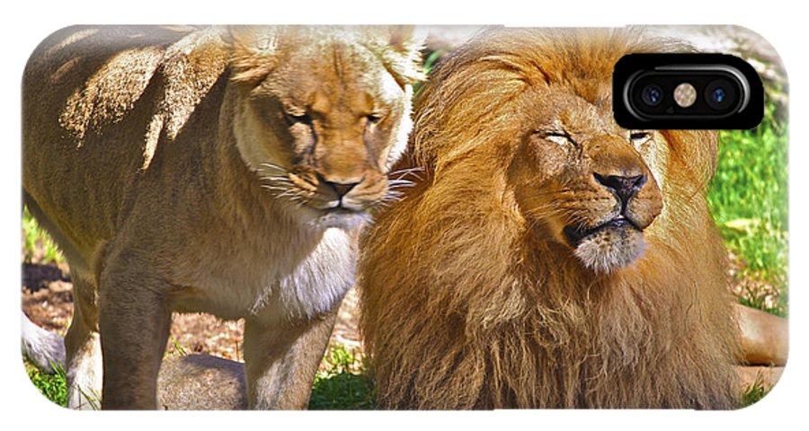 Animals IPhone X Case featuring the photograph Lion Mates by SC Heffner