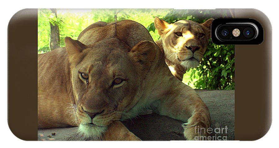 Lion IPhone X Case featuring the photograph Lioness-00104 by Gary Gingrich Galleries