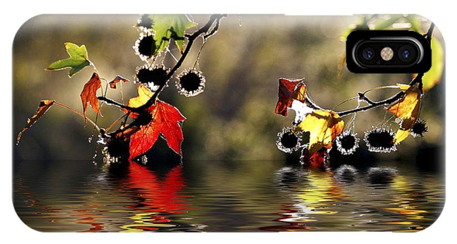 Liquidambar Maple Autumn Fall Flood Water Reflection IPhone X Case featuring the photograph Liquidambar In Flood by Sheila Smart Fine Art Photography