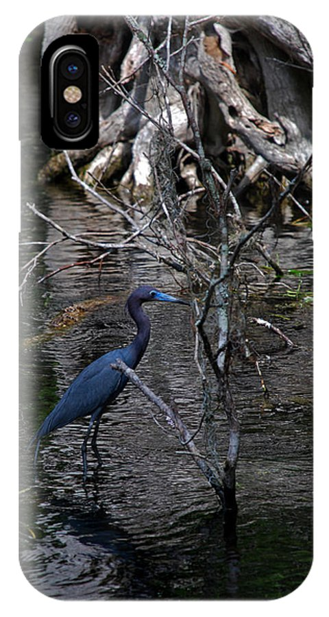 Heron IPhone X Case featuring the photograph Little Blue Heron by Skip Willits