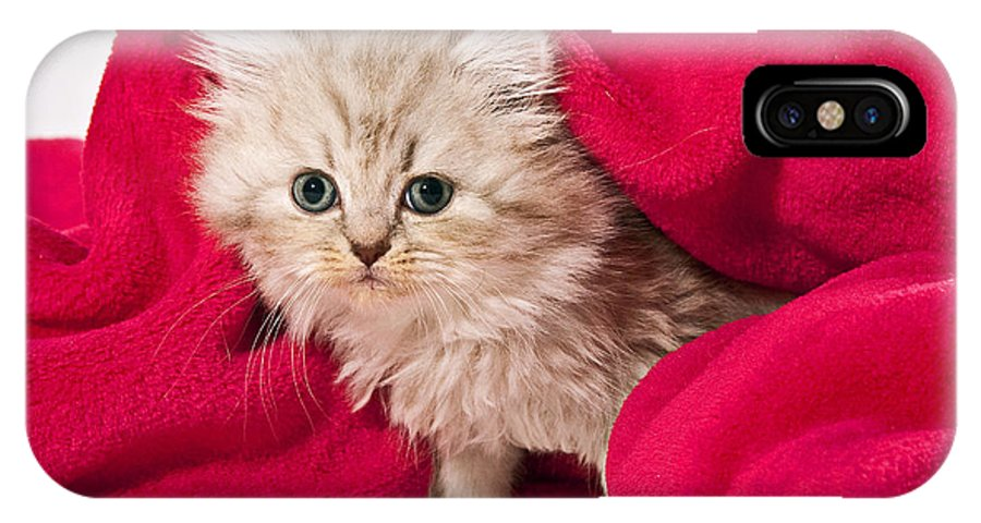 Cat IPhone X Case featuring the photograph Little Kitten With Pink Blankie by Doreen Zorn