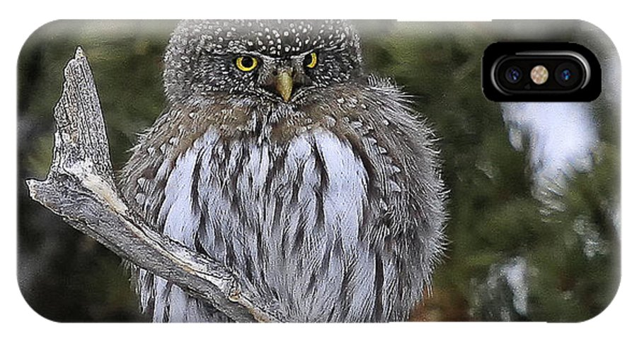 Wildlife IPhone X Case featuring the photograph Little One - Northern Pygmy Owl by Elaine Haberland