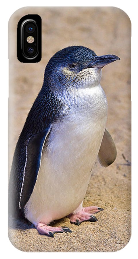 Nature IPhone X Case featuring the photograph Little Penguin by Louise Heusinkveld