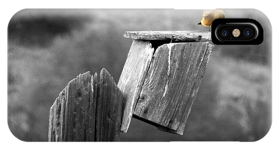 Little Bird IPhone X Case featuring the photograph Little Yellow Bird by Robert Ball