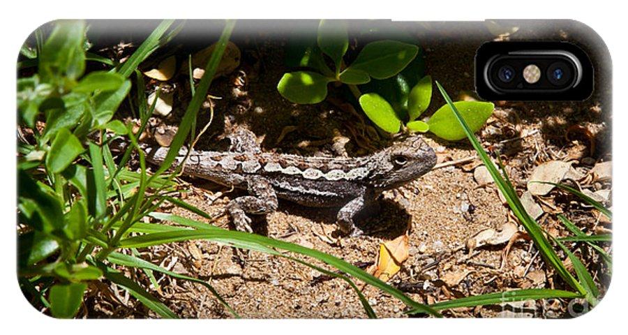 Lizard IPhone X Case featuring the photograph Lizard by Alexander Whadcoat