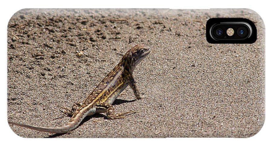 Buy IPhone X Case featuring the photograph Lizard by Carlos V Bidart