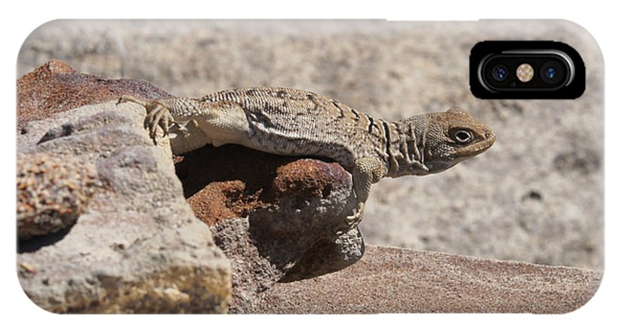 Africa IPhone X Case featuring the photograph lizard from central Madagascar by Rudi Prott
