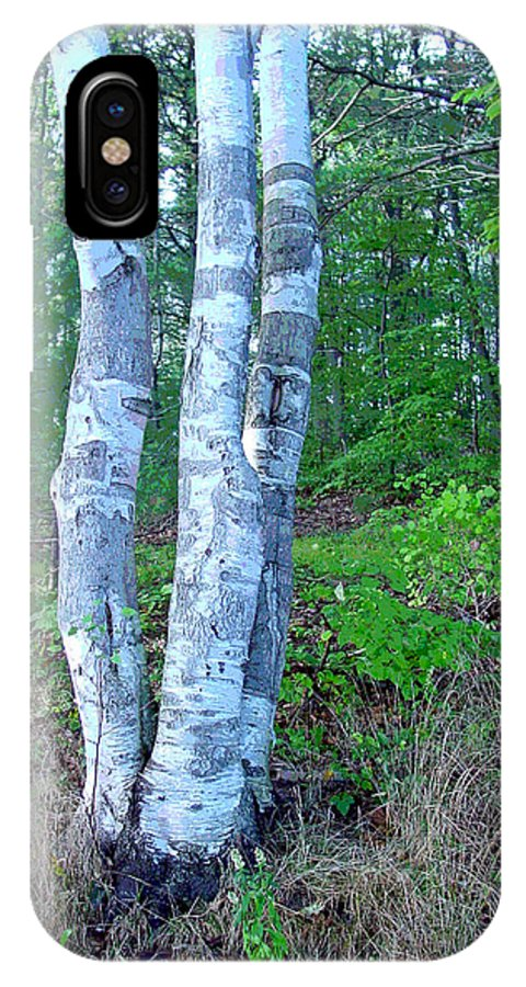 Birch Tree IPhone X Case featuring the photograph Lone Birch In The Maine Woods by Suzanne Gaff
