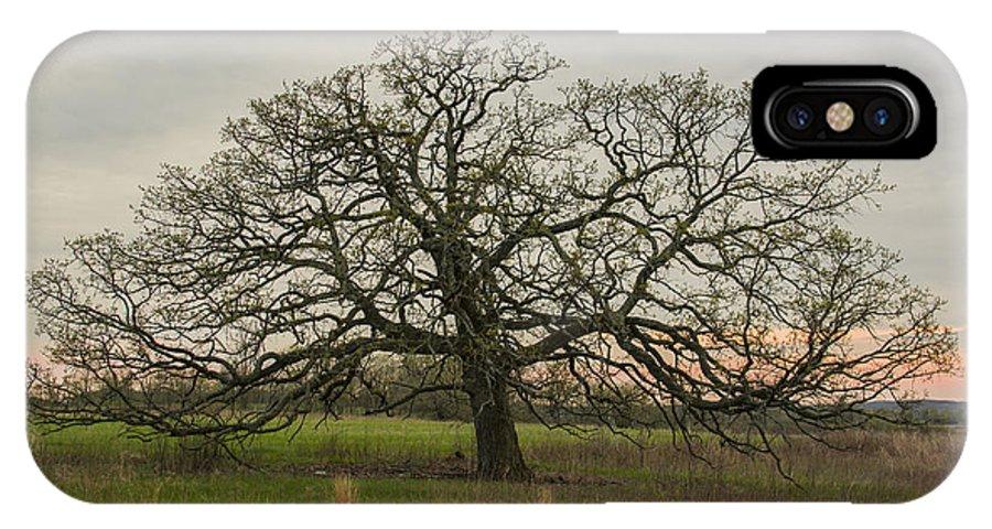 Lone Oak IPhone X Case featuring the photograph Lone Oak - Spring by Dan Hefle