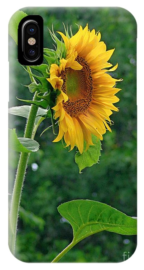 Sunflower IPhone X Case featuring the photograph Lone Sunflower Profile by Jannice Walker