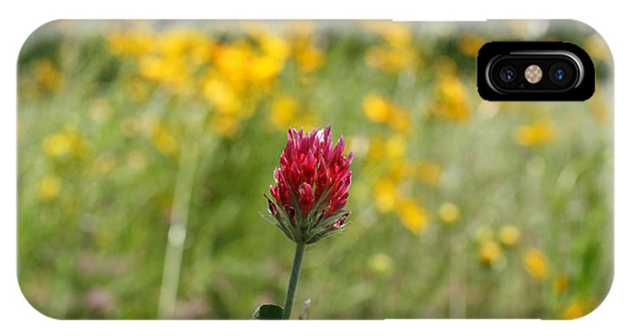 Clover IPhone X Case featuring the photograph Lonely Clover by D L Darden
