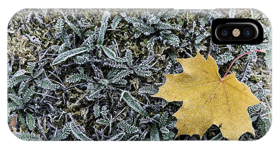 Lonely IPhone X Case featuring the photograph Lonely Maple Leaf And Grass Are Covered With Frost. by Oleg Hmelnits