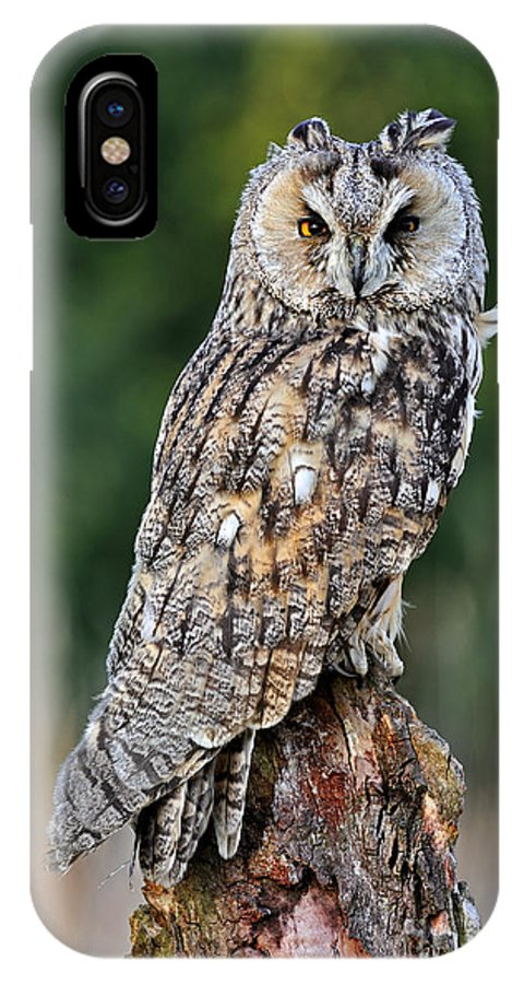Long-eared Owl IPhone X Case featuring the photograph Long-eared Owl 4 by Arterra Picture Library