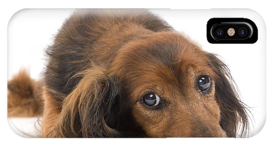 Long-haired Dachshund IPhone X / XS Case featuring the photograph Long-haired Dachshund by Jean-Michel Labat