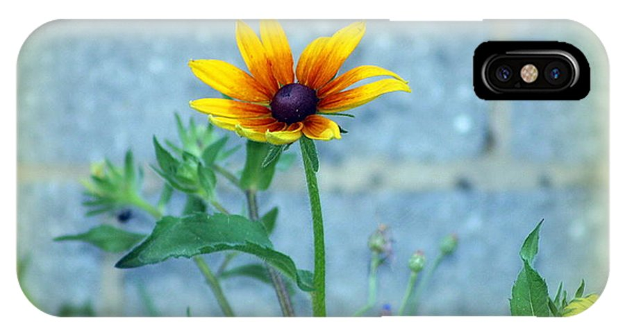 Flowers. Daisey IPhone X Case featuring the photograph Lonley Daisey by Ann Butler