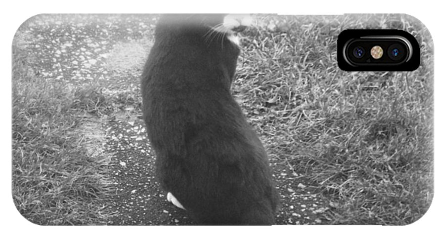 Black Whit Cat Outside Old IPhone X Case featuring the photograph Look Back by Crystal
