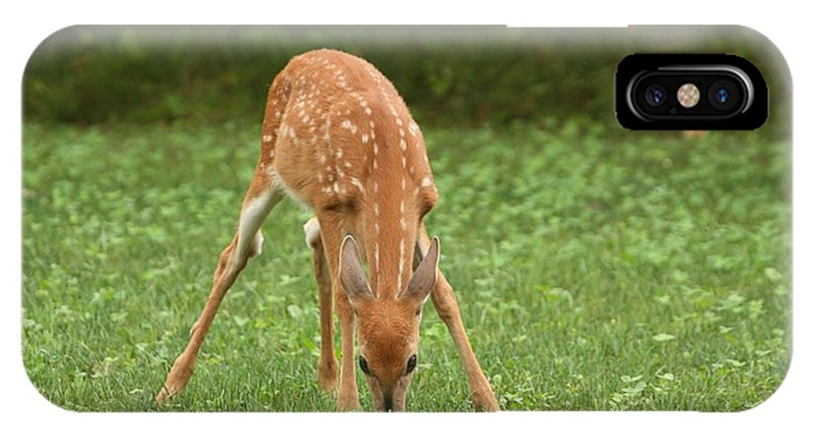 White-tailed Deer IPhone X Case featuring the photograph Look Of Innocence by Teresa McGill