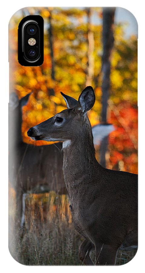 Deer IPhone X / XS Case featuring the photograph Look Over There by Ashley Hall