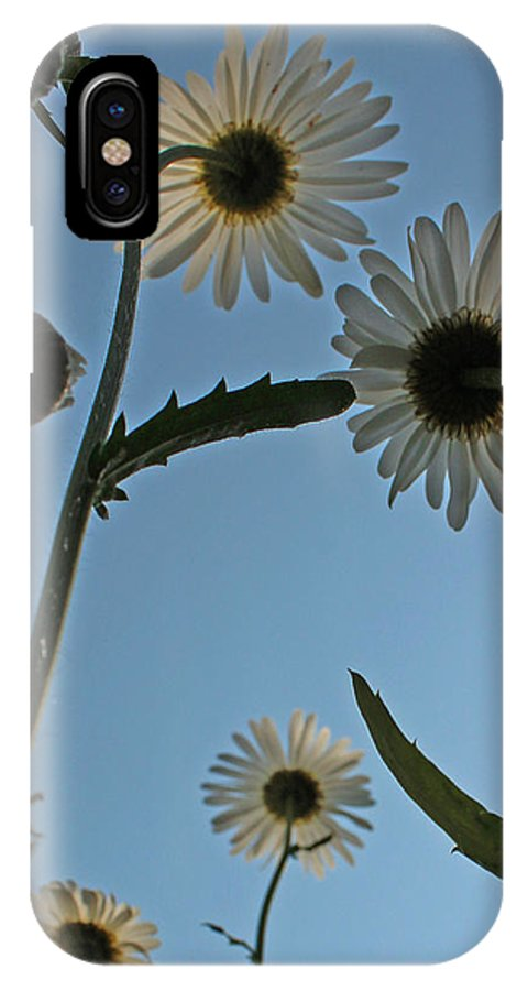 Daisy IPhone X Case featuring the photograph Look Up by Marchelle Studstill