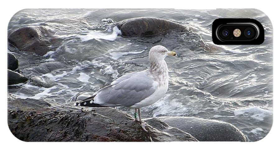 Sea Gulls IPhone X Case featuring the photograph Looking Out To Sea by Eunice Miller