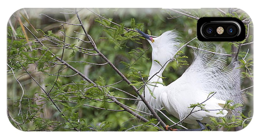 Snowy Egret IPhone X Case featuring the photograph Looking Up by MaryAnn Barry