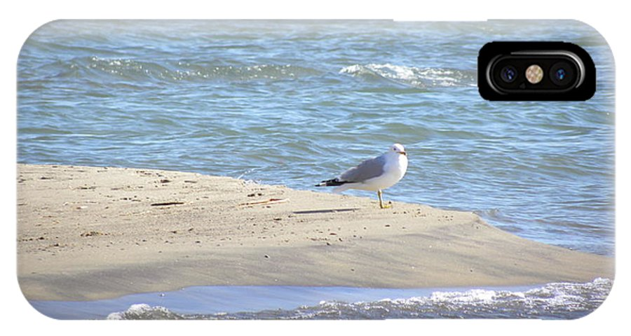 Seagull IPhone X Case featuring the photograph Lookout by Laura Yamada
