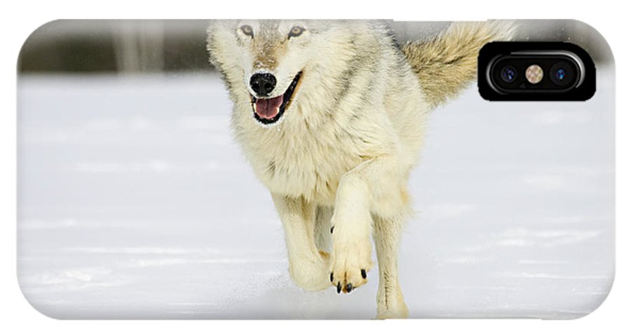 Wolf IPhone X Case featuring the photograph Loping by Jack Milchanowski