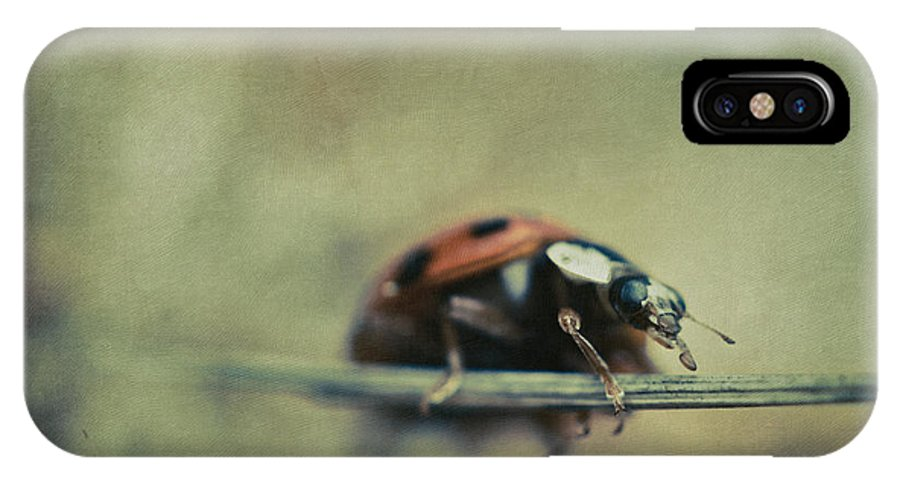 Lady Bug IPhone X Case featuring the photograph Lost Lady by Shane Holsclaw