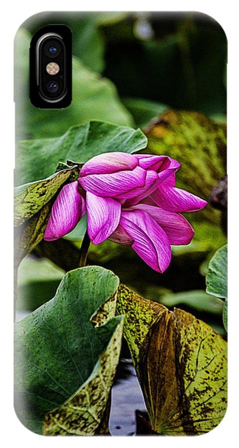 Lotus Flower IPhone X Case featuring the photograph Lotus Flower- Gungarre Billabong by Douglas Barnard