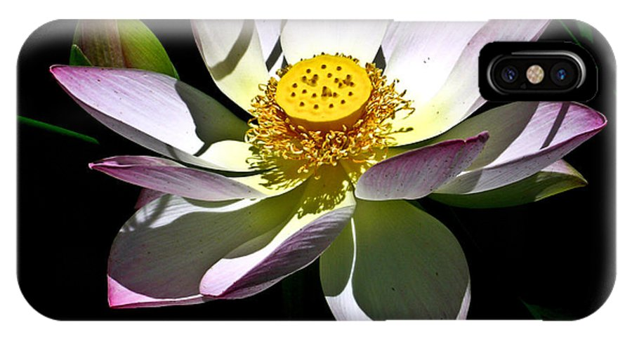 Lotus IPhone X Case featuring the photograph Lotus Of The Night by Douglas Barnett