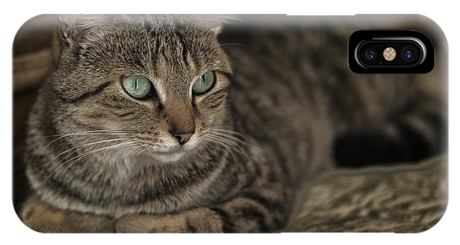 Cat Feline IPhone X Case featuring the photograph Lounging Cat by Brothers Beerens