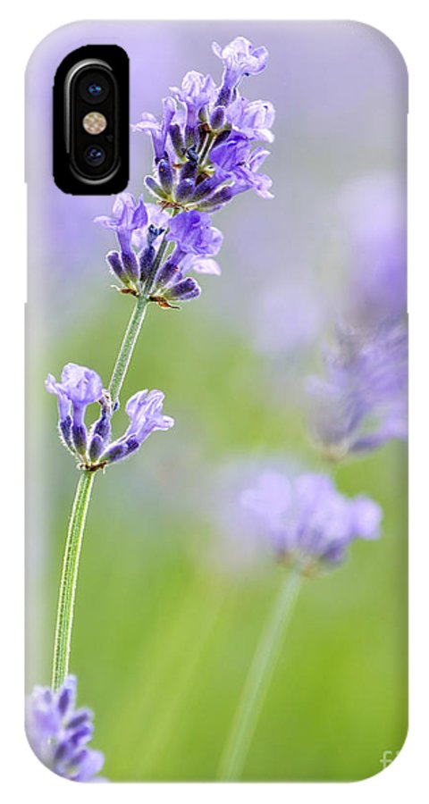 Flowers IPhone X Case featuring the photograph Lovely Lavender by Claudia Kuhn