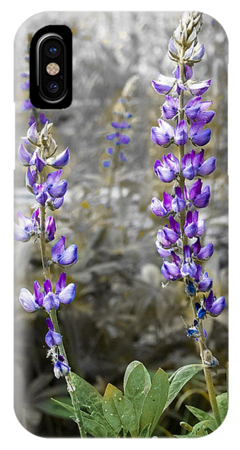 Lupine IPhone X Case featuring the photograph Lovely Lupines by Susan Eileen Evans