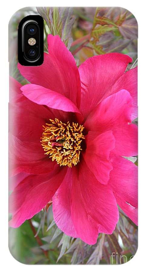 Peony IPhone X Case featuring the photograph Lovely Peony by Christiane Schulze Art And Photography