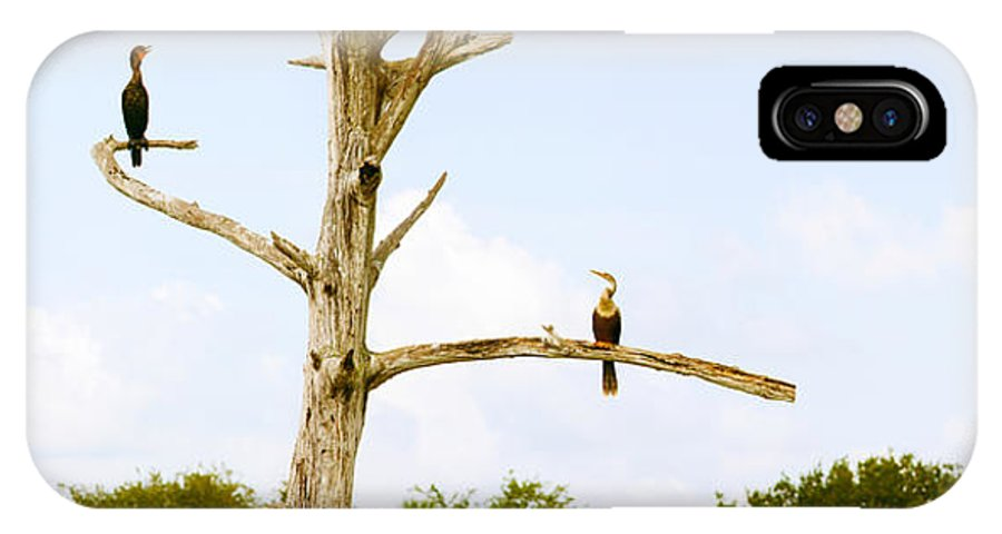Photography IPhone X Case featuring the photograph Low Angle View Of Cormorants by Panoramic Images