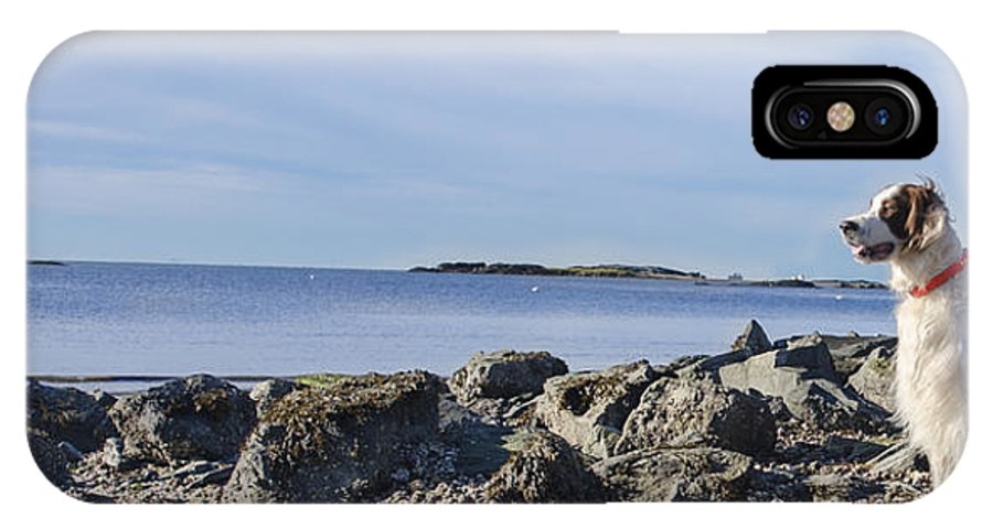 Dogs IPhone X Case featuring the photograph Low Tide Blues by Dominick Cenotti