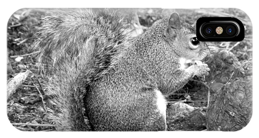 Squirrel IPhone X Case featuring the photograph Lunch Break II by Jeannette Martir