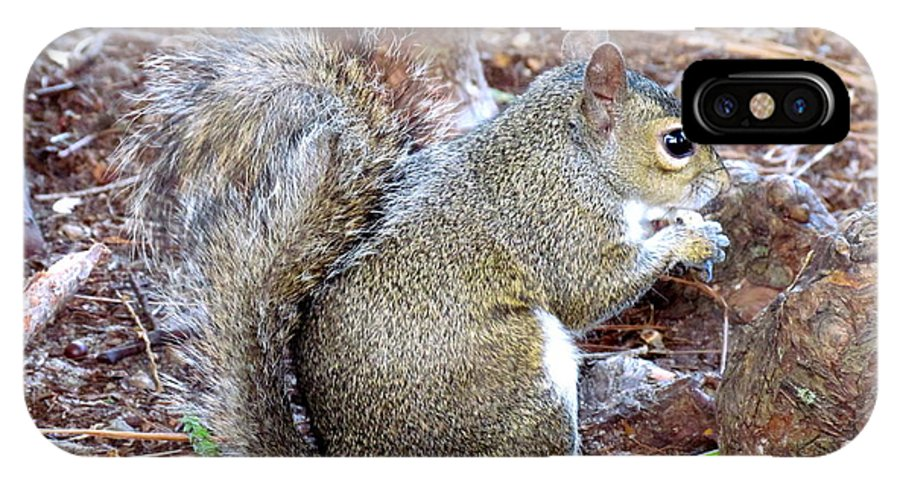 Squirrel IPhone X Case featuring the photograph Lunch Break by Jeannette Martir