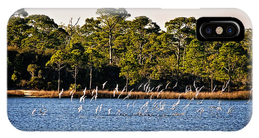 Grayton Beach State Park IPhone X Case featuring the photograph Lunch Time 1 by George Taylor