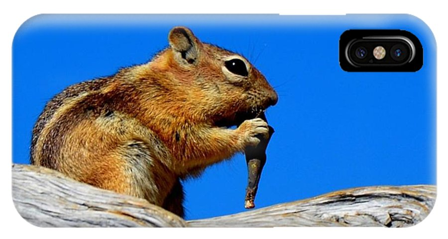 Chipmunk IPhone X Case featuring the photograph Lunch Time by Mark Bowmer