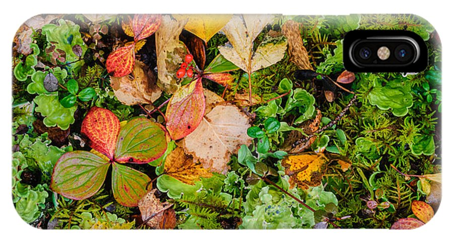 Alaska IPhone X Case featuring the photograph Luscious Lettuce by Susan Serna