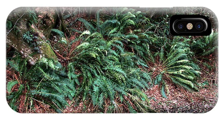 Ferns IPhone X / XS Case featuring the photograph Lush Ferns Of The Forest by Joyce Dickens