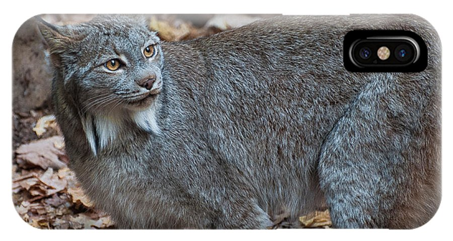 Canadian Lynx IPhone X Case featuring the photograph Lynx Eyes by Bianca Nadeau
