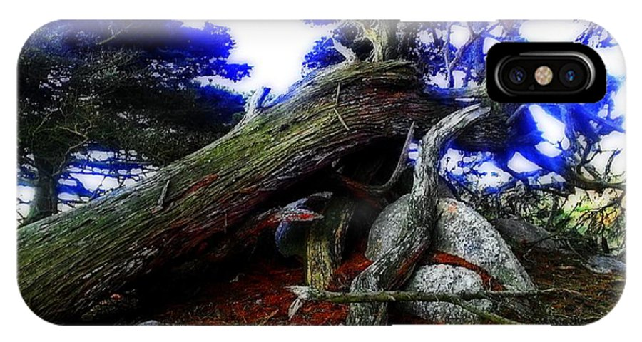 Cypress Tree Photographs IPhone X Case featuring the photograph Magic Forest by Joseph J Stevens