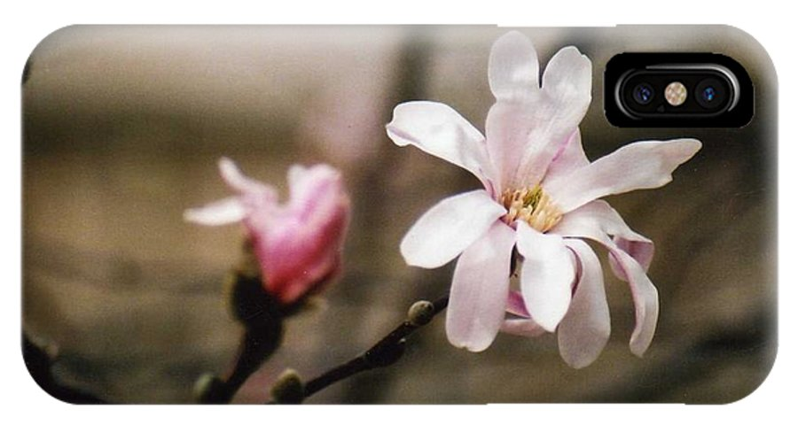 Magnolia Blooms IPhone X Case featuring the photograph Magnolia Blooms by Kay Novy
