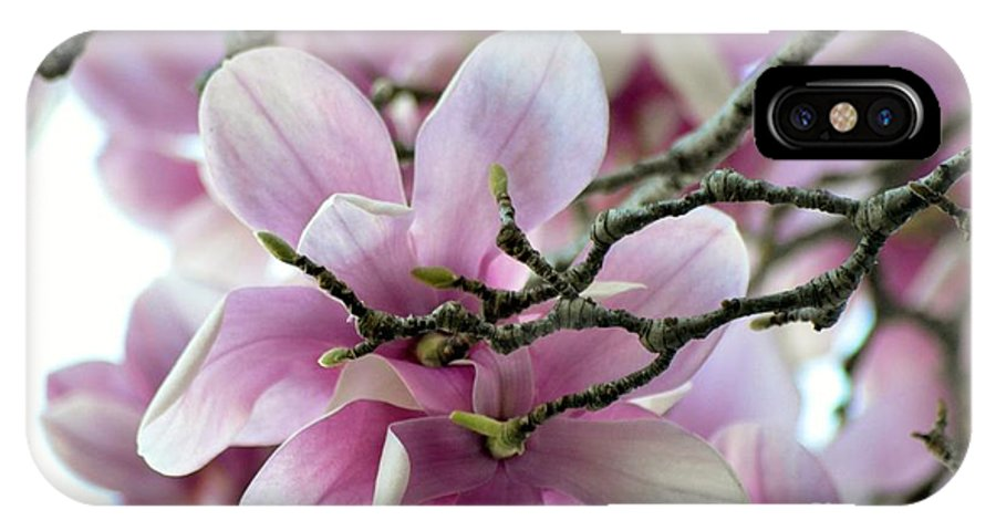 Magnolia IPhone X Case featuring the photograph Magnolia by Cindy Rohde